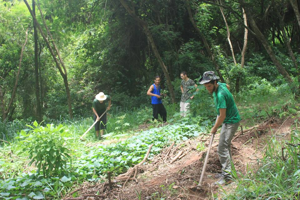 guardiões da floresta harmonizam o espaço para horta orgânica comunitária